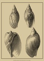 Shells On Khaki XI Fine Art Print