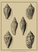 Shells On Khaki XII Fine Art Print