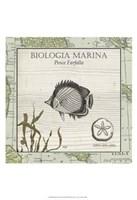 Biologia Marina I Framed Print