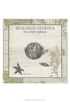 "Biologia Marina II by Jillian Jeffrey - 13"" x 19"", FulcrumGallery.com brand"