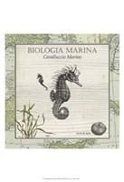 Biologia Marina III Framed Print