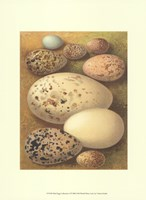 Bird Egg Collection I Fine Art Print