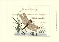 Antique Dragonfly I Fine Art Print