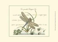 Antique Dragonfly II Fine Art Print