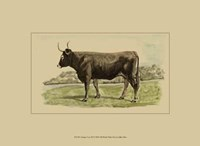 Antique Cow III Fine Art Print