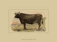 Antique Cow V Fine Art Print