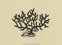 Coral On Khaki III Fine Art Print