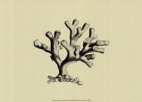 Coral On Khaki IV Fine Art Print