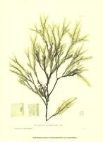 "Seaweed I by Henry Bradbury - 10"" x 13"""