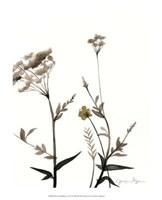 "Watermark Wildflowers I by Jennifer Goldberger - 13"" x 16"""