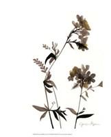 "Watermark Wildflowers II by Jennifer Goldberger - 13"" x 16"""