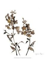 "Watermark Wildflowers IV by Jennifer Goldberger - 13"" x 16"""
