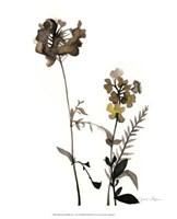 "Watermark Wildflowers V by Jennifer Goldberger - 13"" x 16"""