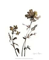 "Watermark Wildflowers VI by Jennifer Goldberger - 13"" x 16"""