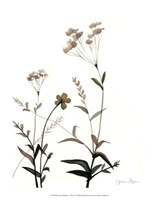 "Watermark Wildflowers VII by Jennifer Goldberger - 13"" x 16"""