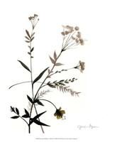 "Watermark Wildflowers VIII by Jennifer Goldberger - 13"" x 16"""