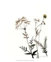"Watermark Wildflowers IX by Jennifer Goldberger - 13"" x 16"""
