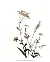 "Watermark Wildflowers X by Jennifer Goldberger - 13"" x 16"""
