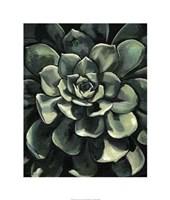 Lunar Succulent I Framed Print