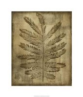 """Sepia Drenched Fern I by Nancy Slocum - 22"""" x 26"""""""
