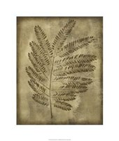 Sepia Drenched Fern II Framed Print