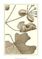 """Cropped Sepia Botanical I by Jillian Jeffrey - 15"""" x 21"""""""