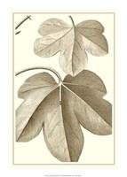 "Cropped Sepia Botanical III by Jillian Jeffrey - 15"" x 21"""