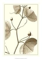 """Cropped Sepia Botanical IV by Jillian Jeffrey - 15"""" x 21"""""""