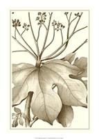 """Cropped Sepia Botanical VI by Jillian Jeffrey - 15"""" x 21"""""""