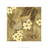 """Sun-Kissed Dogwoods II by Nancy Slocum - 21"""" x 21"""" - $38.99"""