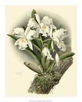 "Dramatic Orchid I by Jillian Jeffrey - 16"" x 20"""