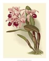 """Dramatic Orchid III by Jillian Jeffrey - 16"""" x 20"""""""