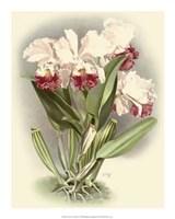 "Dramatic Orchid IV by Jillian Jeffrey - 16"" x 20"""