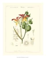 """Lush Tropical I by Jillian Jeffrey - 16"""" x 20"""""""