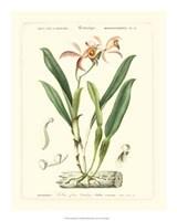 "Lush Tropical VI by Jillian Jeffrey - 16"" x 20"", FulcrumGallery.com brand"