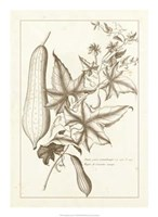 "Sepia Buchoz Exotics IV by Pierre-Joseph Buchoz - 16"" x 22"", FulcrumGallery.com brand"