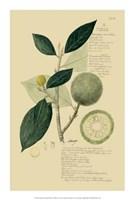 "Descubes Tropical Fruits I by Jillian Jeffrey - 14"" x 21"""