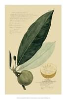 "Descubes Tropical Fruits III by Jillian Jeffrey - 14"" x 21"""