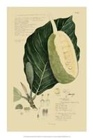 "Descubes Tropical Fruits IV by Jillian Jeffrey - 14"" x 21"""