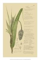 """Descubes Ornamental Grasses II by Jillian Jeffrey - 14"""" x 21"""""""