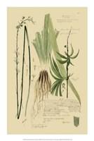 """Descubes Ornamental Grasses III by Jillian Jeffrey - 14"""" x 21"""""""