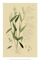 """Descubes Ornamental Grasses IV by Jillian Jeffrey - 14"""" x 21"""""""