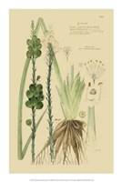 """Descubes Ornamental Grasses VI by Jillian Jeffrey - 14"""" x 21"""""""