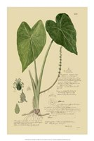 "Descubes Aroid Plant I by Jillian Jeffrey - 14"" x 21"""