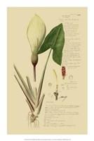 """Descubes Aroid Plant III by Jillian Jeffrey - 14"""" x 21"""""""