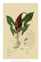 """Descubes Aroid Plant IV by Jillian Jeffrey - 14"""" x 21"""""""