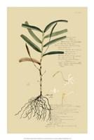 "Descubes Tropical Grasses II by Jillian Jeffrey - 14"" x 21"""