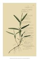"Descubes Tropical Grasses IV by Jillian Jeffrey - 14"" x 21"""