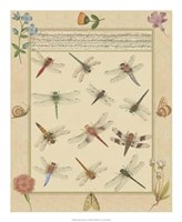 Dragonfly Manuscript I Giclee
