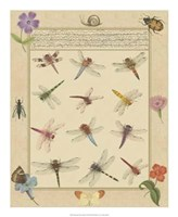 """Dragonfly Manuscript II by Jaggu Prasad - 18"""" x 22"""""""